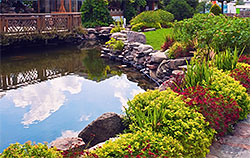Large Garden Pond with a bridge over and lots of beautiful plants surrounding the pond.