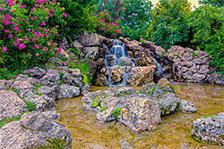 Koi Pond with lots of rocks in the pond and surrounding as well a verdant foiliage.